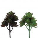 Succulent Pick Echeveria, 2 colors, L20cm, green